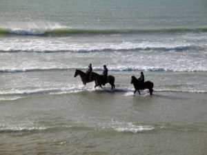 horsesbc